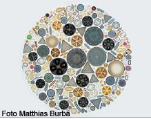 Diatomeen-Burba